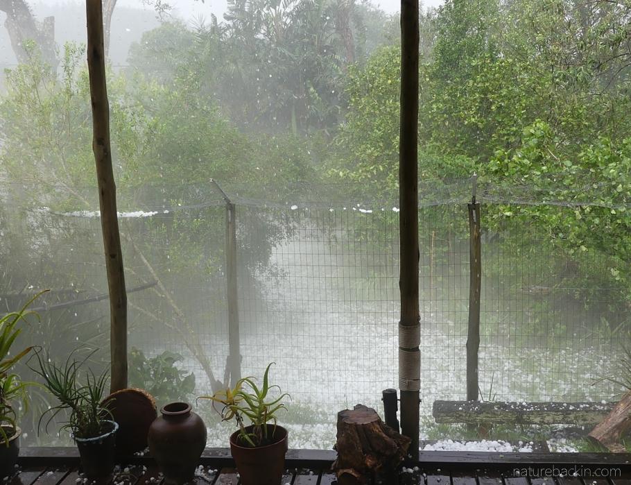 Hailstorm suburban garden KwaZulu-Natal