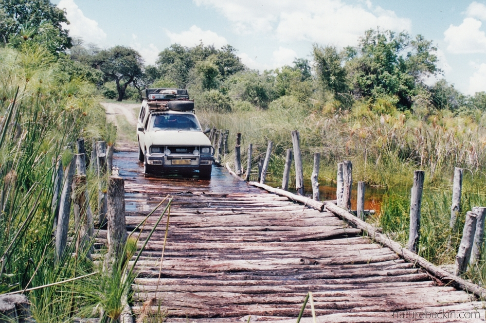 Crossing Third Bridge, Moremi Game Reserve, Botswana