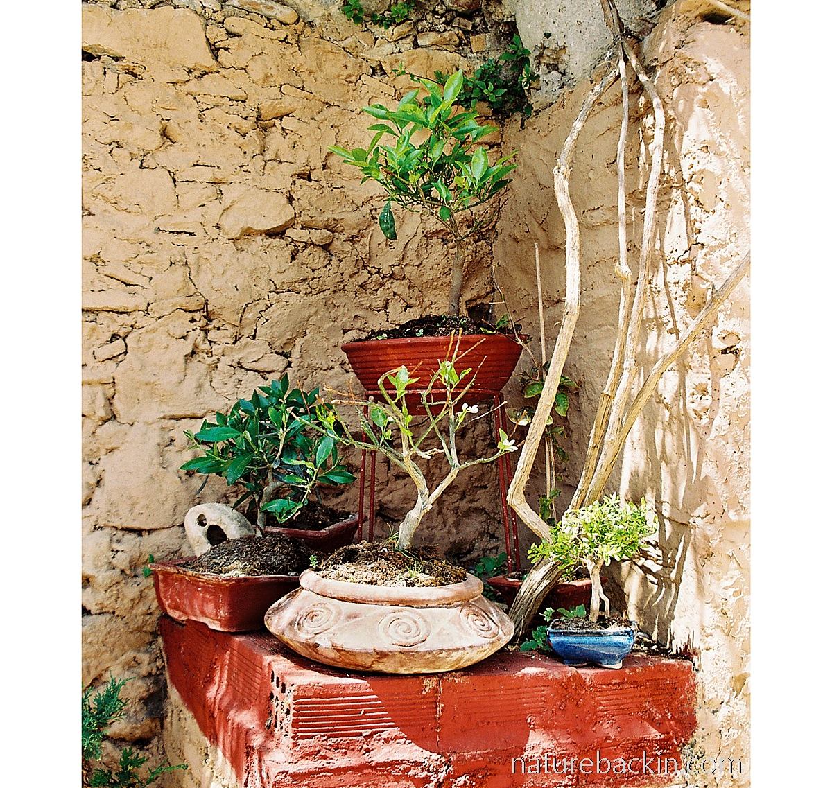Bonsai collection at convent, Mystras, Greece