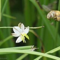 Befriending solitary bees
