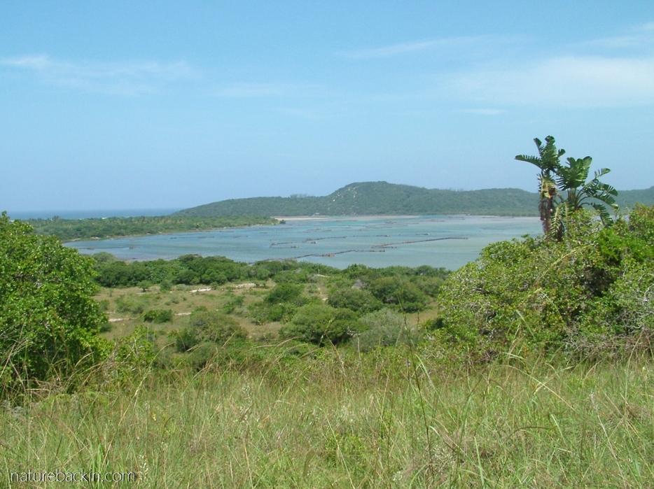 View of Kosi Bay and coastal belt vegetation, Maputaland