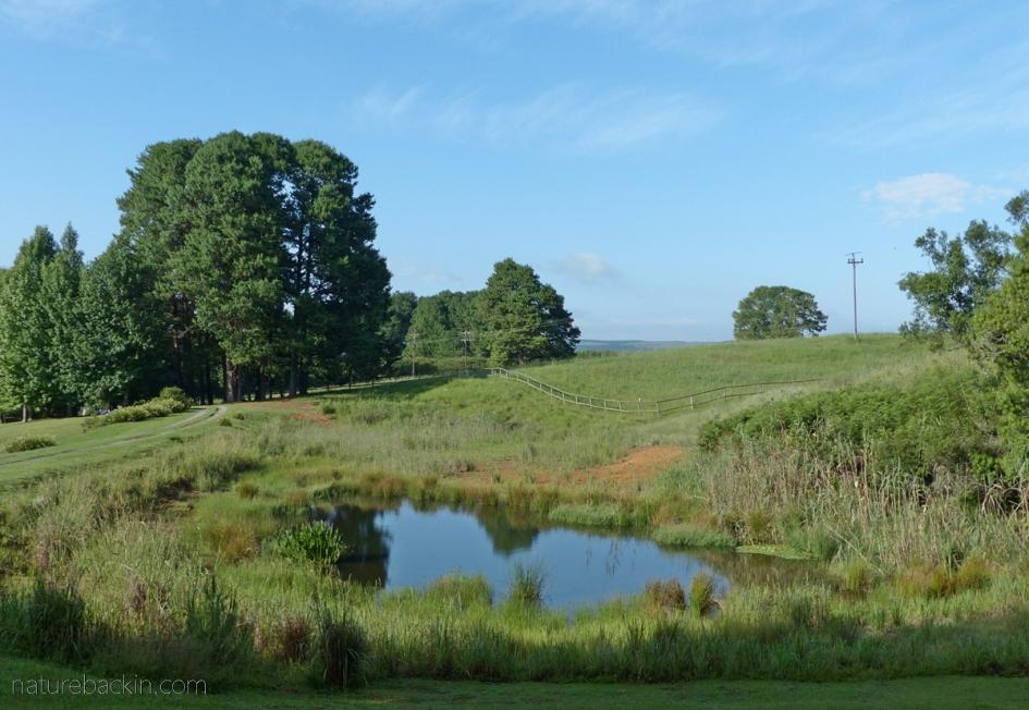 Small farm dam in the Midlands, KwaZulu-Natal
