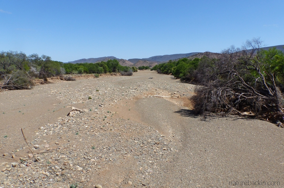 A dry riverbed in the Eastern Cape near Willowmore