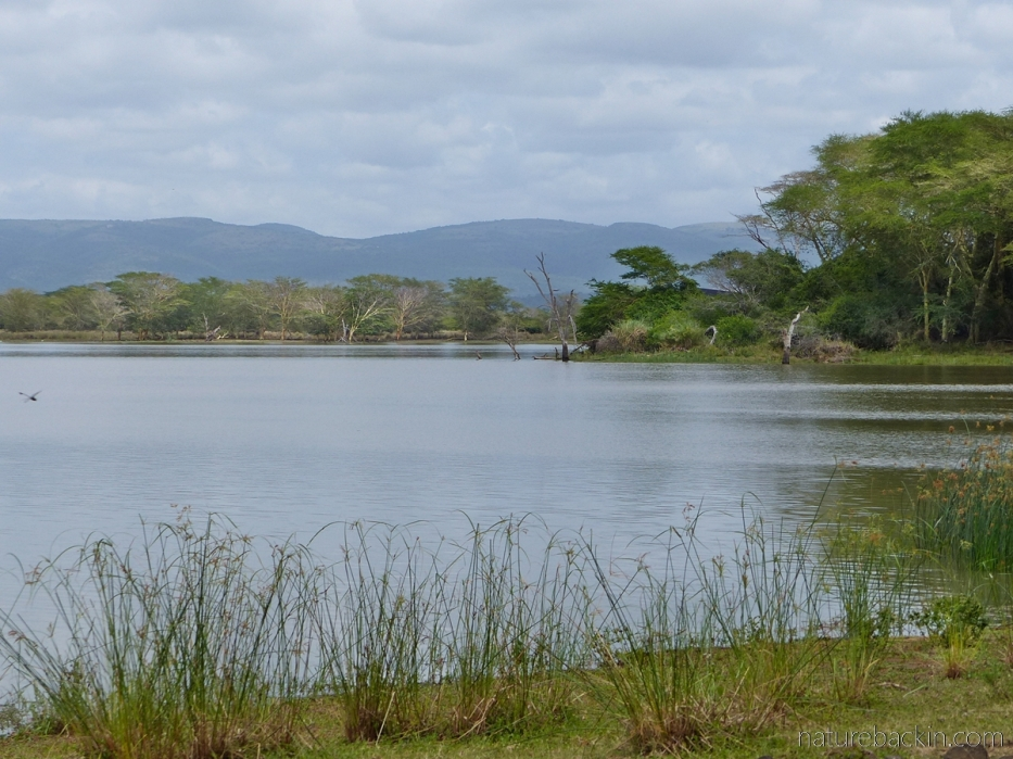 View of Nsumo Pan at Mkhuze Game Reserve, South Africa