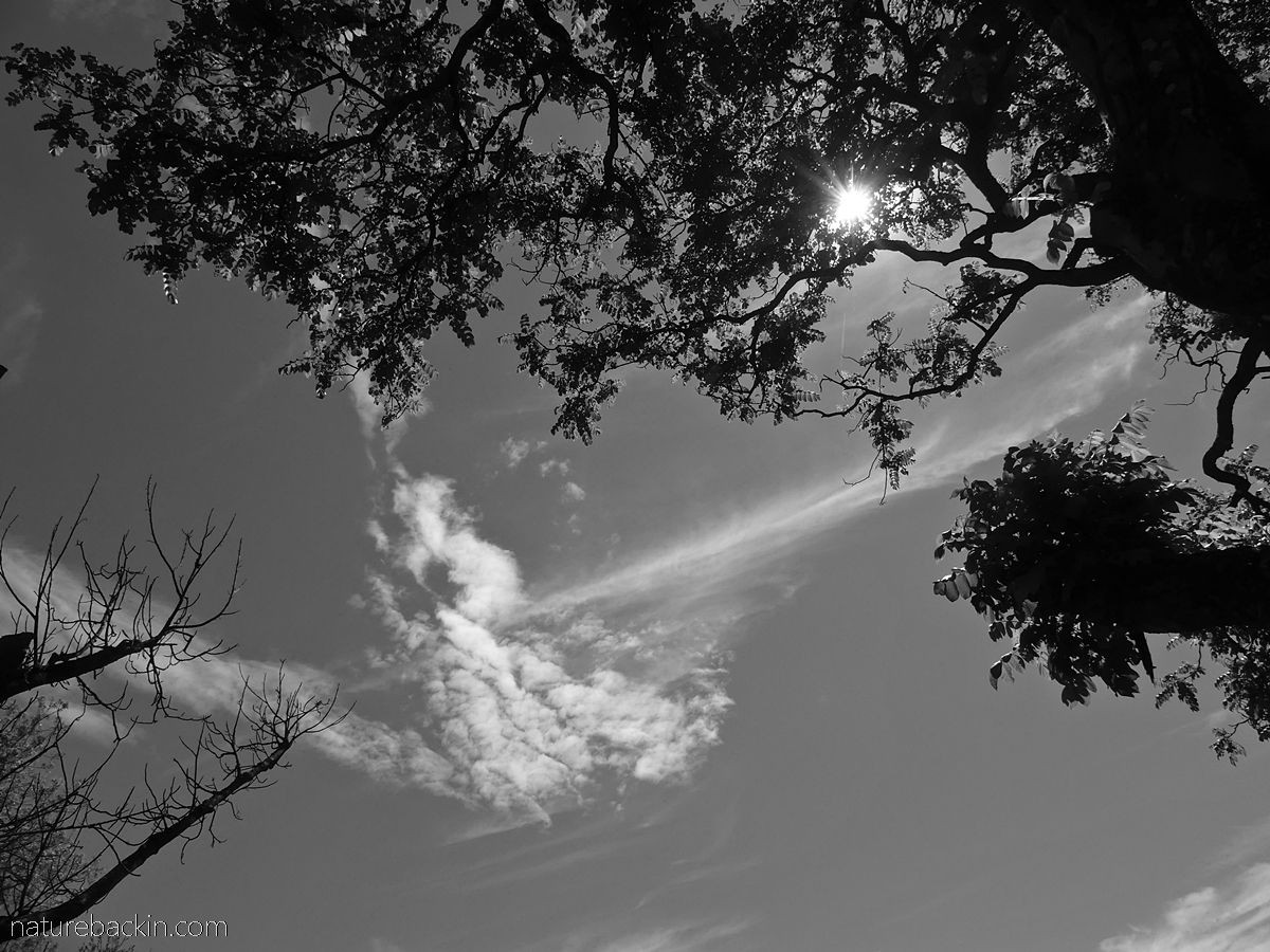 Sky and sun obscured by tree in monochrome